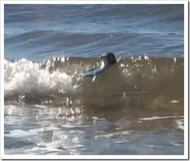 サーフィンするネズミ