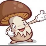 タッチが40日で10kg痩せた秘訣はキノコのマイタケダイエットだった!「寿命を延ばすワザ百科」(日本テレビ)