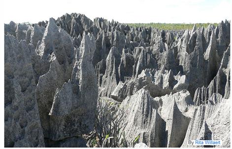 ツィンギ・デ・ベマラ厳正自然保護区の画像 p1_9