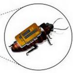 災害で活躍する昆虫型ロボット!そのソフトの開発に成功したらしい