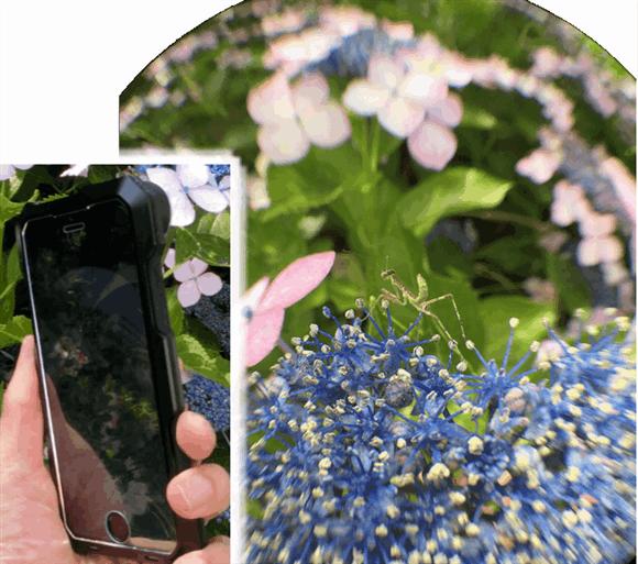 iPhoneに魚眼レンズを装着してカマキリの幼生を撮影