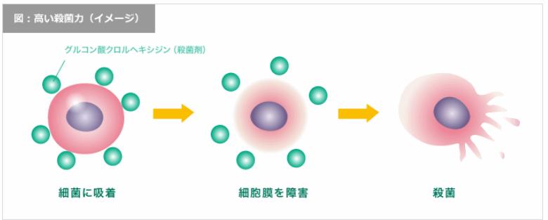 コンクール F が虫歯菌や歯周病菌を死滅させる過程。