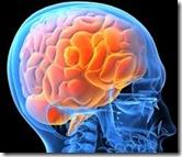 世界一の記憶力保持者の脳の働き