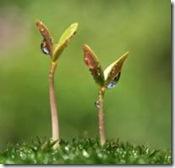 ブログ「アマモ場」の成長、成功の段階