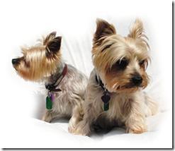 ファインピックスZ700EXR、犬の表情のベストショットを移動で撮影ペット自動検出機能