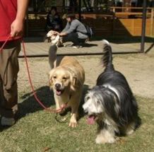 カドリードミニオンで犬と触れ合う。
