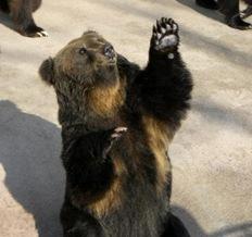 カドリードミニオンの熊さん