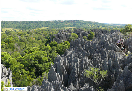 ツィンギ・デ・ベマラ厳正自然保護区の画像 p1_8