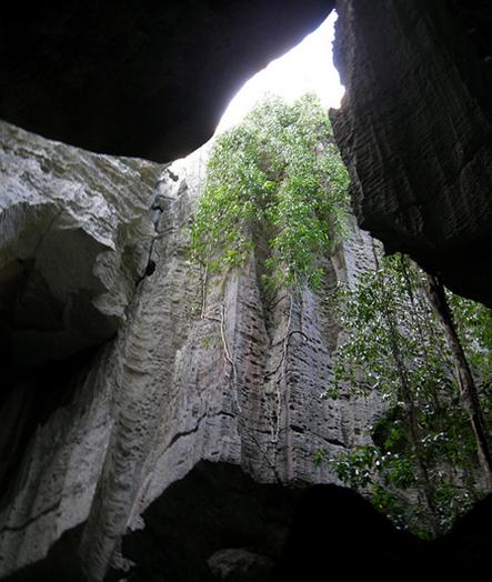ツィンギ・デ・ベマラ厳正自然保護区の画像 p1_25